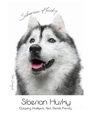 Digital Art - Siberian Husky Poster by Tim Wemple
