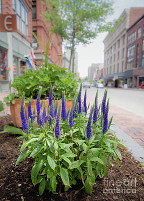 Photograph - Sidewalk Sage, Portland, Maine  -65703 by John Bald