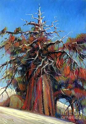 Sierra Juniper Art Print by Donald Maier