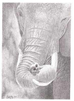 Elephant Pencil Drawing Drawing - Siesta by Dino Baiza