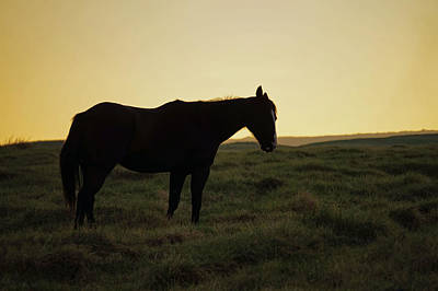 Photograph - Silhouetted Horse by Pamela Walton