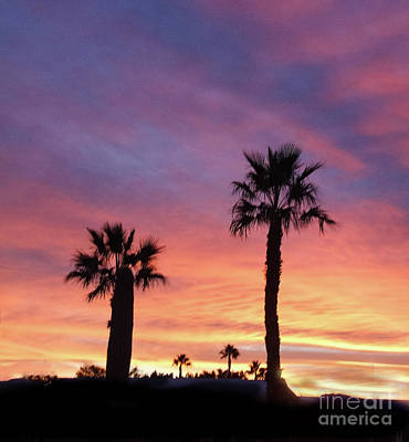 Photograph - Silhouetted Palm Trees by Robert Bales