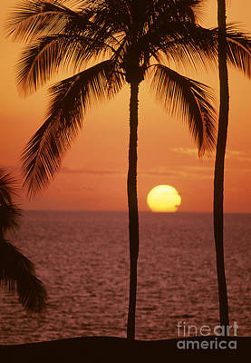 Large Sinks Photograph - Silhouetted Palms by Carl Shaneff - Printscapes