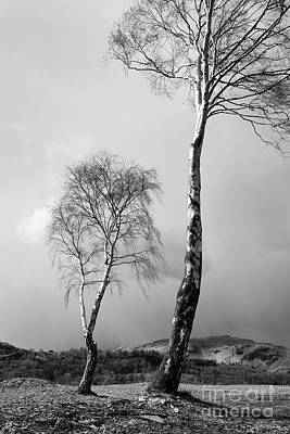 Langdale Pikes Photograph - Silver Birch - Monochrome by Tony Higginson