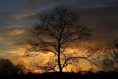 Photograph - Silver-gold Sunset by Kathryn Meyer