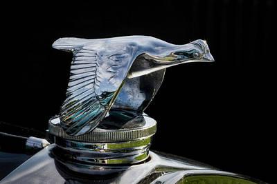 Photograph - Silver Goose by Mark David Gerson