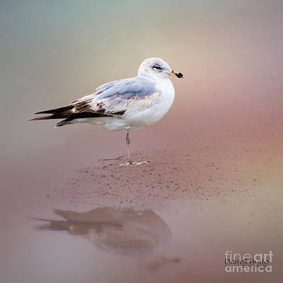 Light Photograph - Silver Gull by J Darrell Hutto
