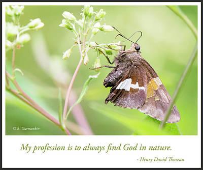 Photograph - Silver-spotted Skipper Butterfly by A Gurmankin