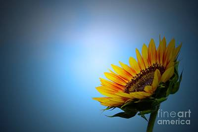 Photograph - Simply Golden by Angela J Wright