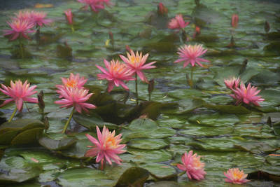 Photograph - Simply Monet by JAMART Photography