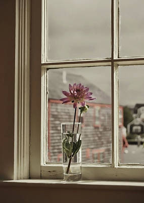 Photograph - Single Flower Vase by JAMART Photography
