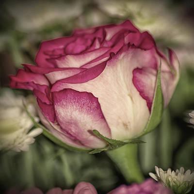Single Rose Art Print by Martin Newman