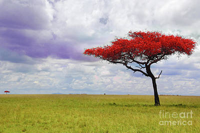 Photograph - Single Tree by Charuhas Images