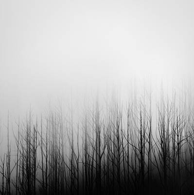 Photograph - Skeleton Trees 3 by Mihai Florea
