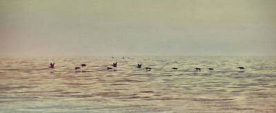Photograph - Skimming Pelicans by JAMART Photography