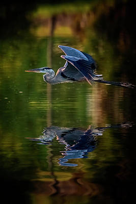 Photograph - Skimming The Surface by Cyndy Doty