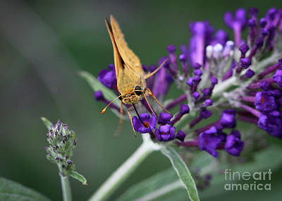 Photograph - Skipper by Douglas Stucky
