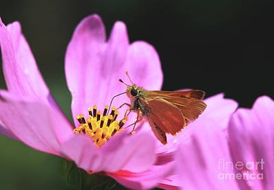 Cosmos Photograph - Skipper by Gary Wing