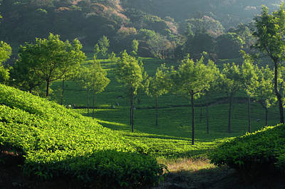 Photograph - Skn 6757 Magnificent Munnar. B/w by Sunil Kapadia