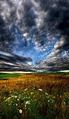 Fall Leaves Photograph - Sky High by Phil Koch