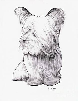 Drawing - Skye Terrier by Frances  Dillon