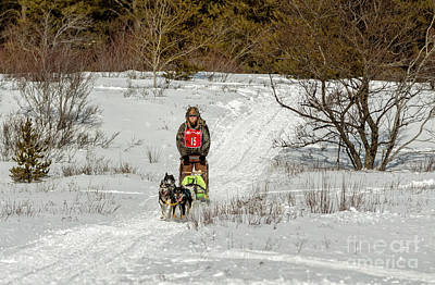 Huskie Wall Art - Photograph - Sled Dog Races by Upper Peninsula Photography