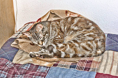 Digital Art - Sleeping by Photographic Art by Russel Ray Photos