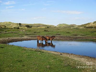 Photograph - Small Lake With Wild Horses by Chani Demuijlder