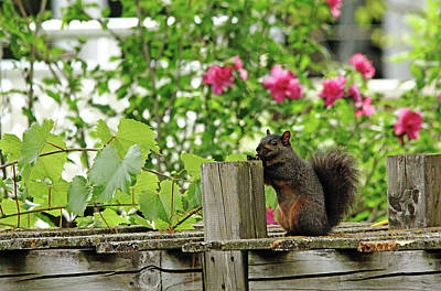 Photograph - Smile by Debbie Oppermann