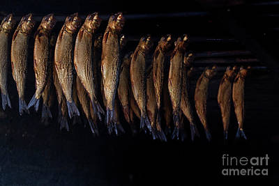Photograph - Smoking Fish by Patricia Hofmeester