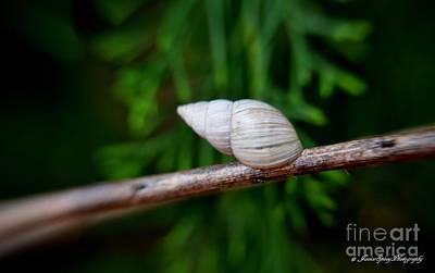 Photograph - Snail by Janice Spivey