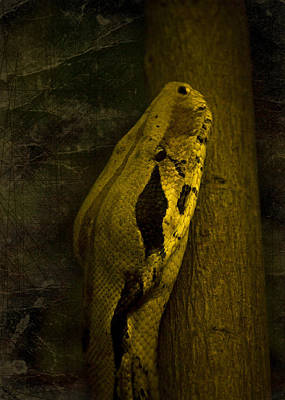 Mellow Yellow - Snake by Svetlana Sewell