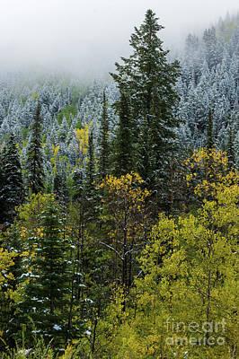 Photograph - Snow - Aspen - Pine - Winter Fog - Wasatch Mountains by Gary Whitton