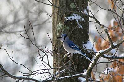 Snow Bird  Original