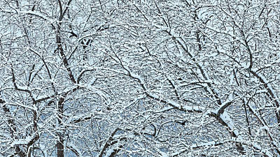 Photograph - Snow Covered Branches 2 by Alan L Graham