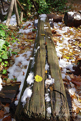 Photograph - Snow In The Forest by George Atsametakis
