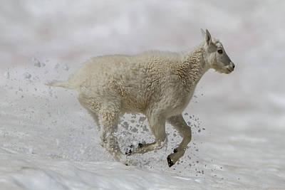 Photograph - Snow Run by Kent Keller