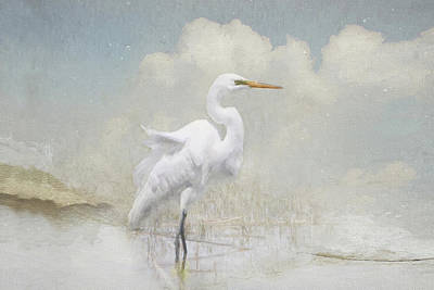 Photograph - Snowy Egret 2 by Karen Lynch