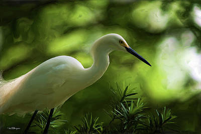 Digital Art - Snowy Egret V.2 by Travis Burgess