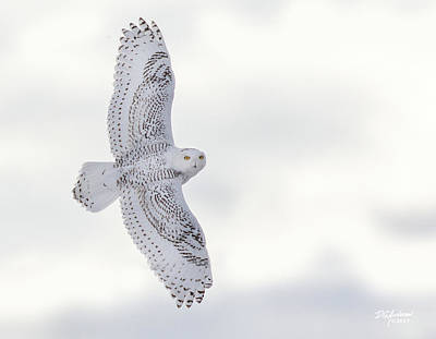 Photograph - Snowy Flyby by Don Anderson