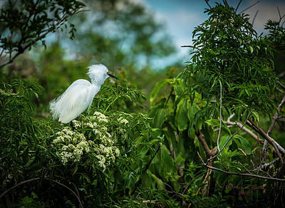 Heron Photograph - Snowy by Marvin Spates