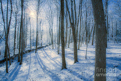 Connecticut Winter Photograph - Snowy New England Forest by Diane Diederich