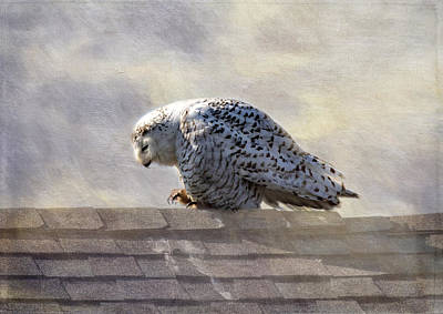 Photograph - Snowy Owl  by Betty Pauwels