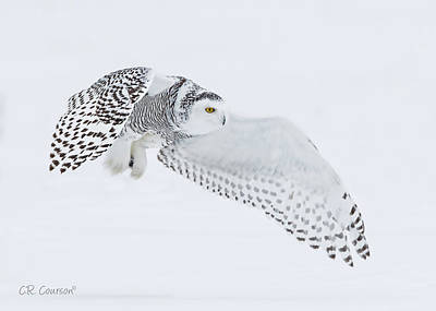 Photograph - Snowy Owl In Flight by CR Courson