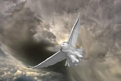 Snowy Owl In Flight Print by Mark Duffy