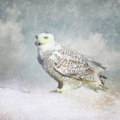 Photograph - Snowy Owl by Karen Lynch
