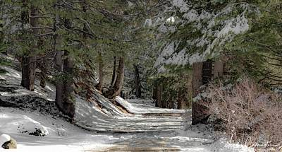 Photograph - Snowy Path by Wendy Carrington