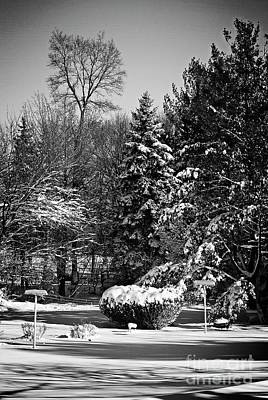 Frank J Casella Royalty-Free and Rights-Managed Images - snowy Pine in Silver by Frank J Casella
