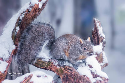 Photograph - Snowy Squirrel by Peg Runyan