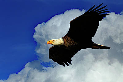 Photograph - Soaring Eagle by Gary Corbett